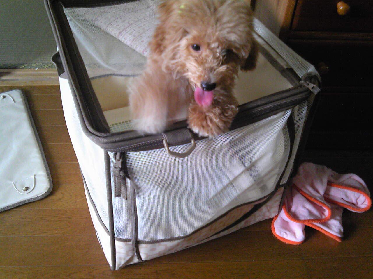 犬と車で旅行